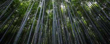The 5 Pillars of Quuu's Culture