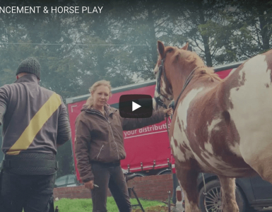 Big Announcement & Horse Play - Founder's Vlog